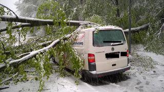 Das Firmenauto eines 56-Jährigen wurde von einem umstürzenden Baum getroffen. Er wurde leicht verletzt.