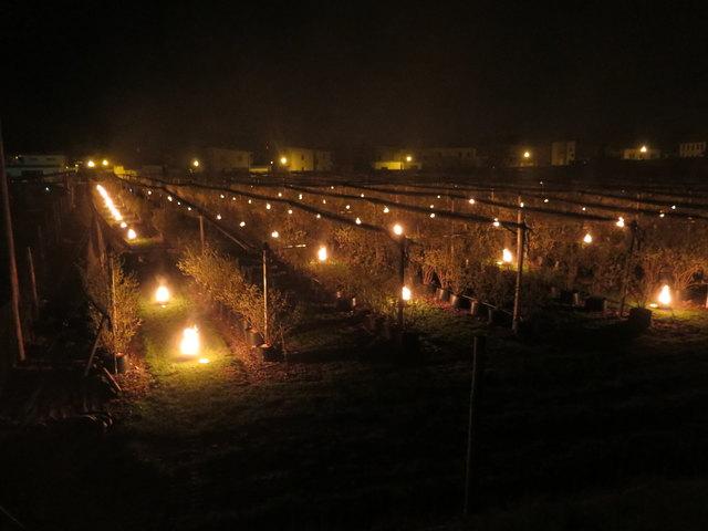 Brennender Heidelbeergarten: Um ein Uhr Früh entzündete Familie Matschnig in Ebenthal das Feuer, um ihre Kulturen vor dem Frost zu schützen.
