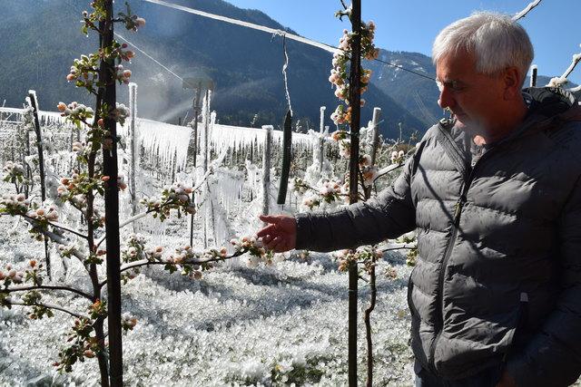 Heinz Kofler zeigt die Folgen der Frostnacht.