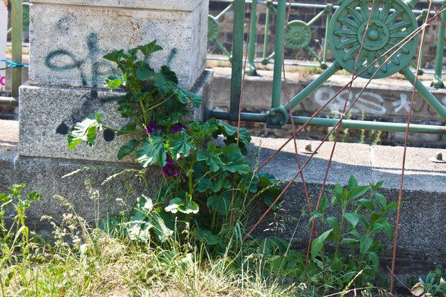 Dem Unkraut an manchen Stellen freien Lauf lassen, kann nützlich bei der Gartenarbeit sein.