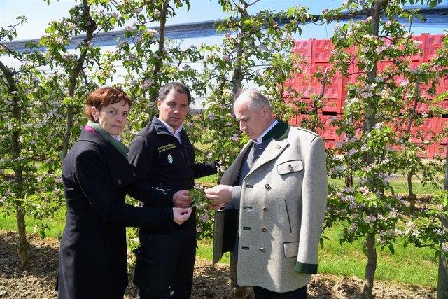LH-Stv. Michael Schickhofer (M.) und LR Johann Seitinger sowie Maria Pein, Vizepräsidentin der Landeskammer für Land- und Forstwirtschaft in der Steiermark besuchten Betroffene der Frostschäden in der Steiermark, so auch in St. Stefan ob Stainz.