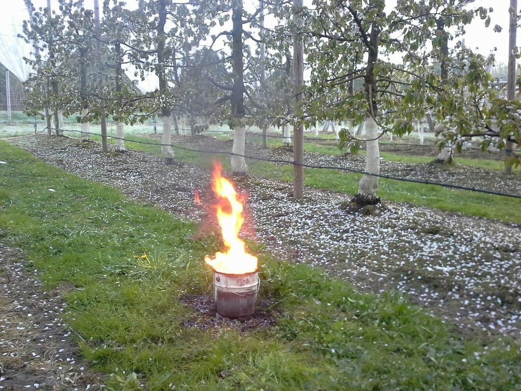 """Bei """"Floberry"""" in Reith wurde in der Plantage eingeheizt um die Blüten zu retten."""