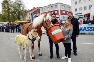 Beim Pferdemarkt in Waizenkirchen wurde es auch heuer wieder niedlich.