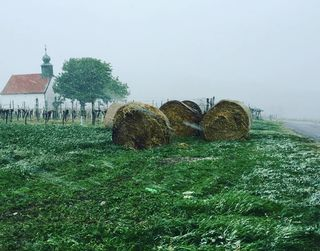 Im Neckenmarkter Weingebirge herrscht Frost.