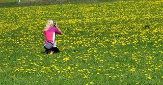 eine Sonnenwiese...hier gibts genug Nektar für unsere fleißigen Bienen