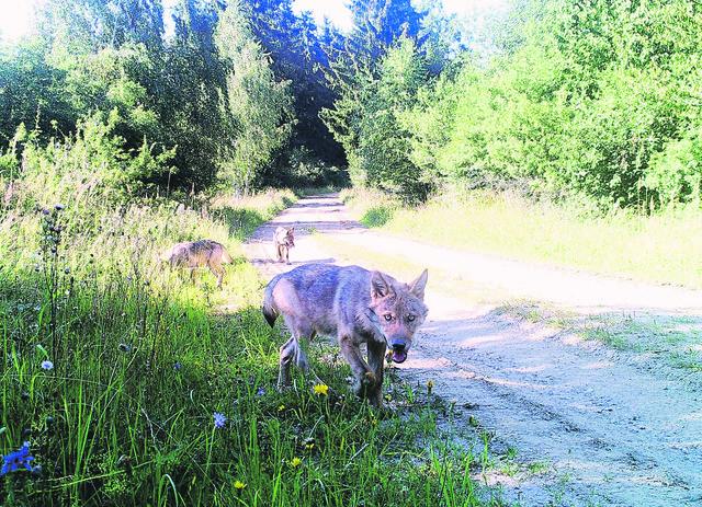 Blitz dating aus krottendorf-gaisfeld: Single flirt in langkampfen