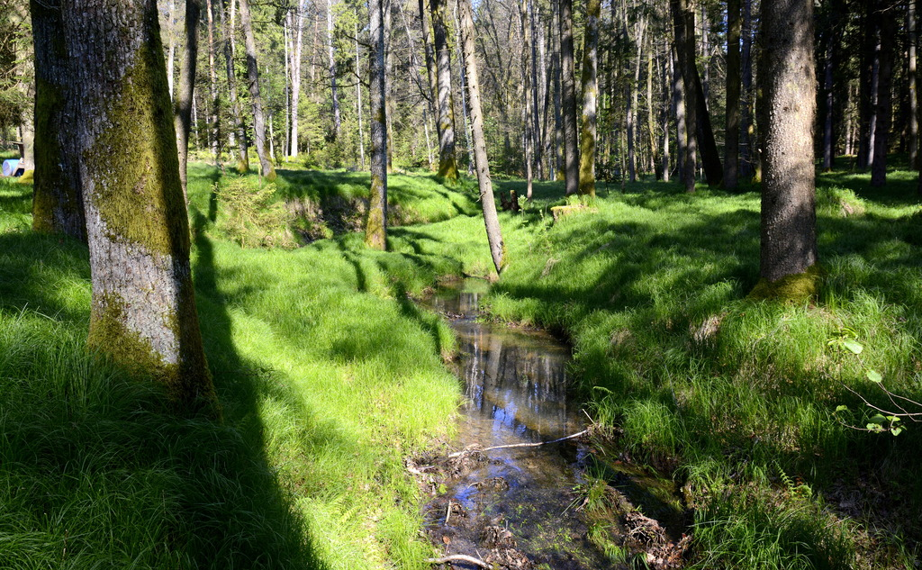 Die Farbe Grün Und Ihre Bedeutung Graz Umgebung