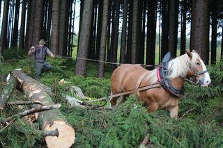 Forstwirtschaftsmeister Wolfgang Handl gab beim achten Mondseelandtag in Tiefgraben einen Einblick in die traditionelle und bodenschonende Holzbringung mit dem Pferd.