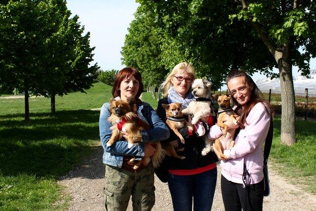 Gabi, Miriam und Brigitte (v.l.) machen mobil: Sie warnen alle Hundebesitzer vor Giftködern am Leberberg.