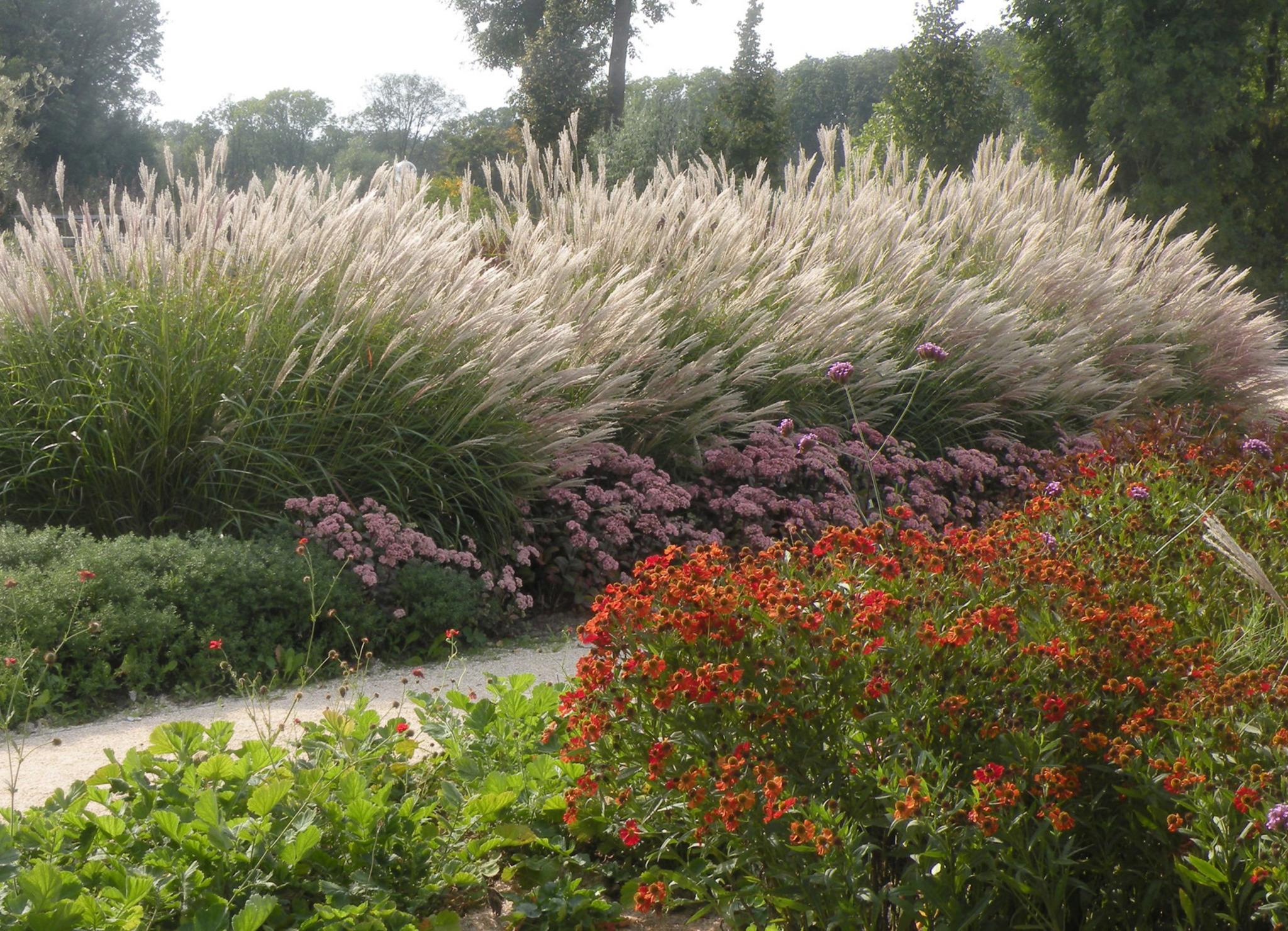 Natur im garten jetzt stauden pflanzen tulln for Stauden pflanzen