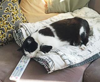 Auch die zweifarbige Cleo gehört zu den Katzen, die in Landskron in den vergangenen Wochen verschwunden sind
