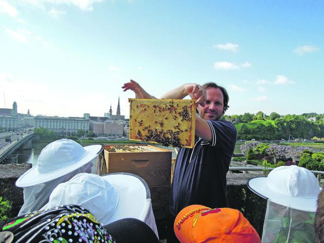Doppelt so viele Imker innerhalb von drei Jahren: Die Biene findet in der Stadt eine neue Heimat.
