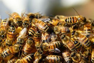 Deutsch-Griffen: Auch die transportierten Bienenvölker fielen den Flammen zum Opfer