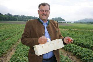 Landwirt Veit Prettner baut in St. Donat auf drei Hektar Erdbeeren an. Ab ca. 1. Juni kann man die süßen Früchte pflücken