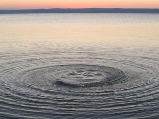 Wirbel im Neusiedlersee