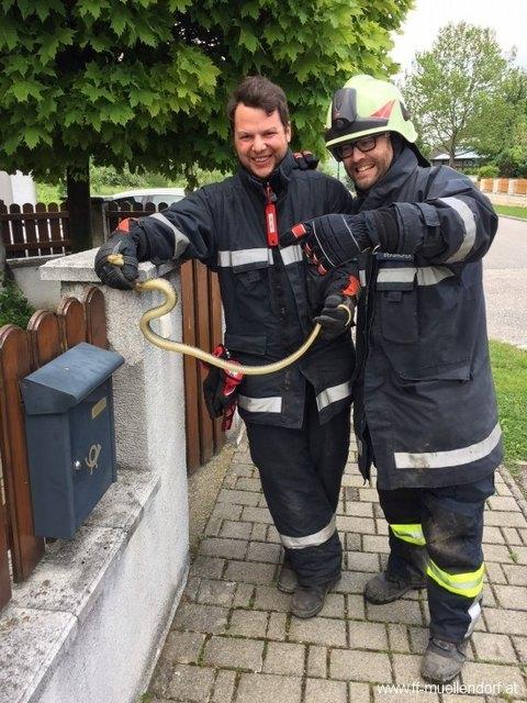 Die Müllendorfer Feuerwehr als Schlangenretter