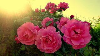 Die Schönheit der Dinge lebt in der Seele dessen, der sie betrachtet. (David Hume) ❤️