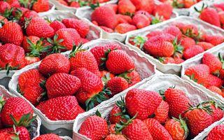 Lust auf Erdbeeren? Die Saison beginnt!