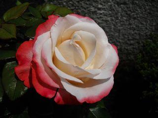 """""""Rosen und Kinder brauchen Sonne und Liebe, erst dann lächeln sie, strahlen und leuchten!"""""""