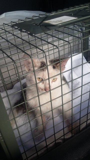 Katzenbabys Thema Auf Meinbezirk At