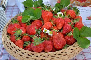 Erdbeermarmelade gelingt am besten mit reifen, frischen Früchten direkt vom Feld!