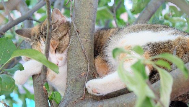 Die Katendame Puki hat einen Apfelbaum in Enzesfeld-Lindabrunn für sich entdeckt.