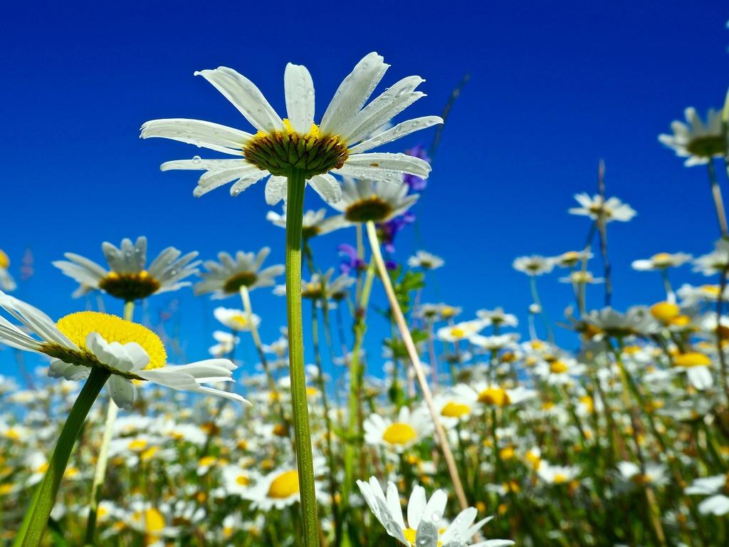 Der Letzte Schnappschuss Bevor Auch Diese Schöne Blumenwiese Gemäht