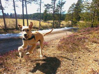 Nicht jeder Hund kann ungezwungen herumtollen, manche Hundehalter sind unberechenbar. Symbolfoto