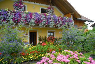 Alle Hobbygärtner sind eingeladen, ihre Blumen- und Pflanzenpracht zu präsentieren. Ganz egal, ob auf ein paar Quadratmetern am Balkon oder großzügig im Garten – mitmachen lohnt sich.