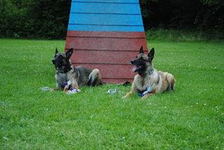 Mutter und Aohn erfolgreich in Agility und Unterordnung mit Hundeführerin Iris Bozek.