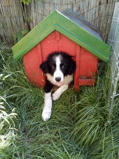 Laura (6 Monate) ist ein richtiges Energiebündel, sehr verspielt und an andere Hunde & Katzen gewöhnt.