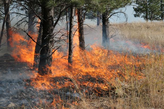 Waldbrandgefahr im Bezirk Schärding –die Bezirkshauptmannschaft reagiert (Symbolbild).