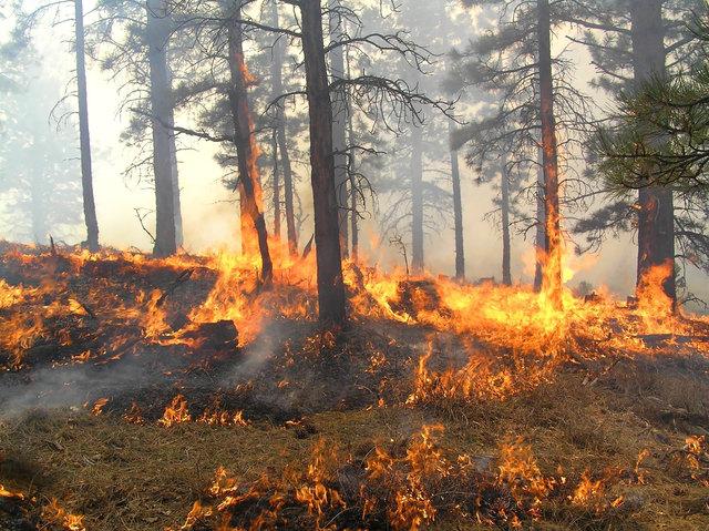 Waldbrandverordnung: Rauchen und Feuer in Waldgebieten, Waldrandnähe und dem Gefährdungsbereich des Waldes verboten
