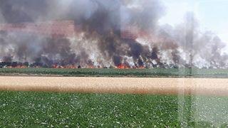 Ein Feld in Breitenlee steht in Flammen. Die Einsatzkräfte haben das Gröbste gebannt.