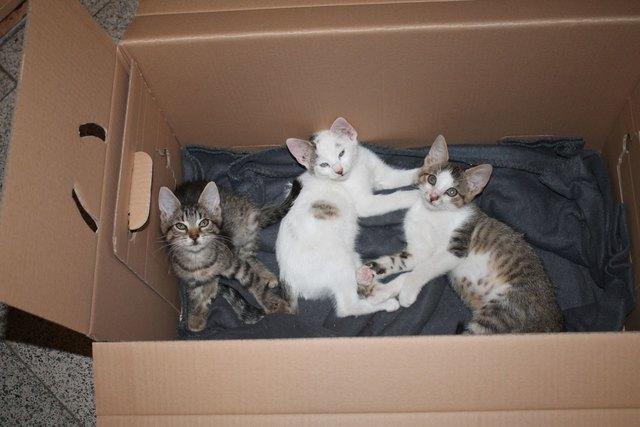Die Kätzchen hatten Glück und wurden von einem Autofahrer mit Herz entdeckt.