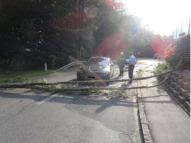 Mittwoch Nachmittag fiel ein Baum auf ein fahrendes Auto.