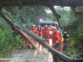 Entwurzelte Bäume blockierten in Bad Goisern eine Gemeindestraße, erst die Feuerwehr konnte die Straße wieder passierbar machen.