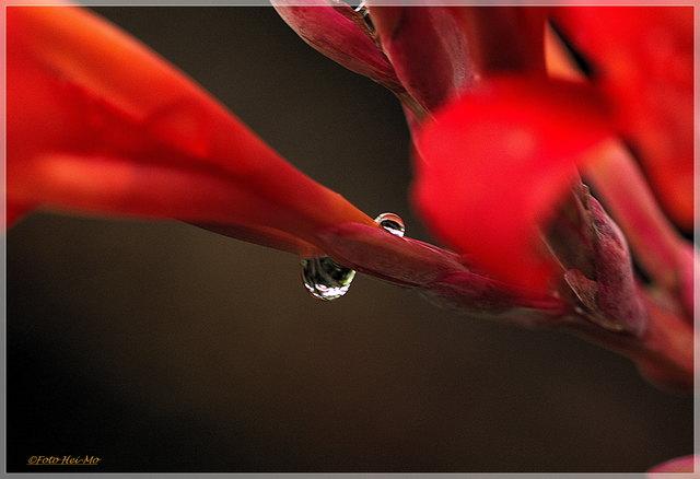 ...ist die Blüte der Canna besonders erfrischt! ;)