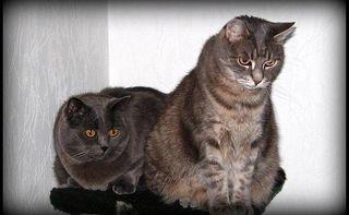 """Die Katze begleitet den Menschen bereits seit Jahrtausenden. Sie ist ein nicht wirtschaftlich genutztes Haustier, was die Verbindung zwischen Mensch und Hauskatze so einzigartig macht. Der 8. August ist der """"Weltkatzentag"""". © Gerhard Singer"""