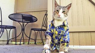Fauchend, spielend oder schnurrend: Katzen erobern am 31. August die Leinwand.