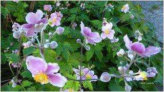 Eine Blütenpracht