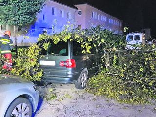 Der Baum krachte bei dem Sturm auf ein parkendes Auto.