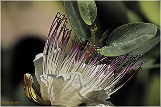 Diese Blüte sende ich Euch mit lieben Gruessen aus Italien!