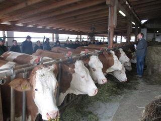Peter Schlagbauer aus Mortantsch kann vorsichtig aufatmen: Die Milchpreisentwicklung schafft höhere Milchauszahlungspreise.