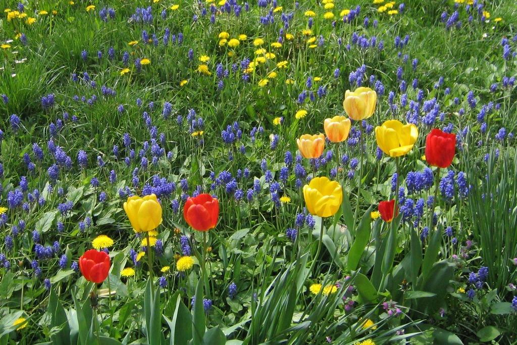 So Schön Ist Der Frühling Doch Dafür Müssen Jetzt Zwiebel Gepflanzt Werden