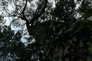 In diesem Beispiel hatte die Kamera eine schwierige Lichtsituation, die sie bei der Entwicklung des Fotos berechnen musste. Im Wald war es verhältnismäßig dunkel, während der Himmel sehr hell war.
