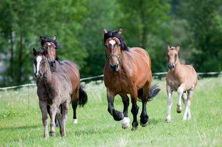 Pferde sind auch wirtschaftlich sehr bedeutend.
