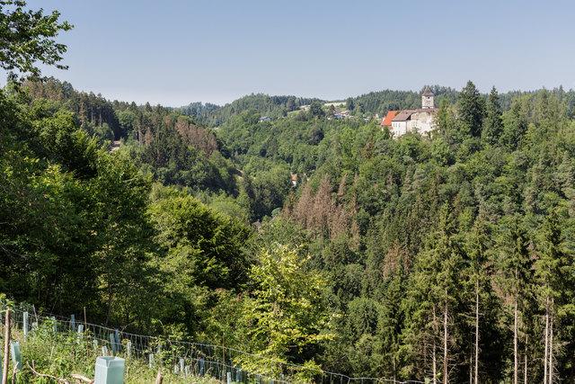 Der Fichtenbestand rund um Schloss Eschelberg ist stark vom Borkenkäfer bedroht.