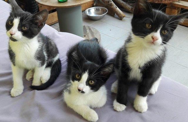 Katzen Zu Vergeben Thema Auf Meinbezirk At