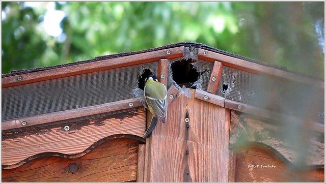 Die Meise hat sich zum Mittagessen eingefunden. Da Fallen Reparaturarbeiten am Dach an ;)